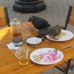 Даже голуби оценили вкус ...